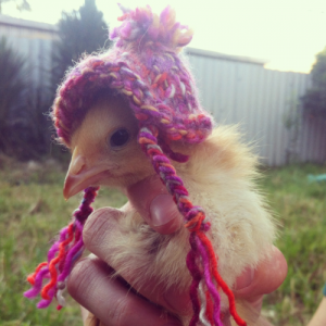 chicken_hat2