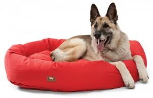 Organic-Bumper-w-Dog-Otto