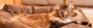 luxury_cat_beds_greta