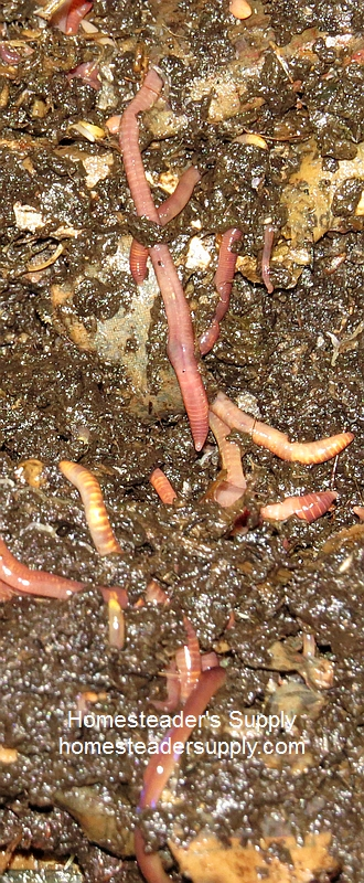 Vermicomposting with Worm Factory