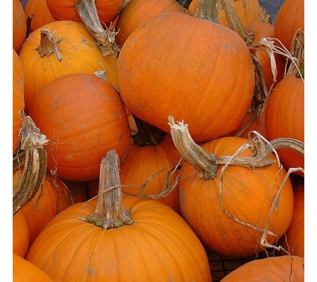 What to Grow in the Garden – Pumpkins and Winter Squash