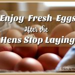 How to Enjoy Your Fresh Eggs After the Hens Stop Laying