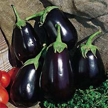 Eggplant, Black Beauty Eggplant Heirloom Heirloom