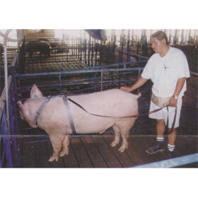 AI Boar Harness