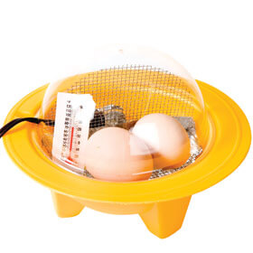 Incubator - Chick bator Case of 12