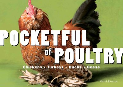 Pocketful of Poultry: Chickens, Ducks, Geese, Turkeys