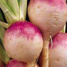 Turnip, Purple Top White Globe Heirloom Seeds