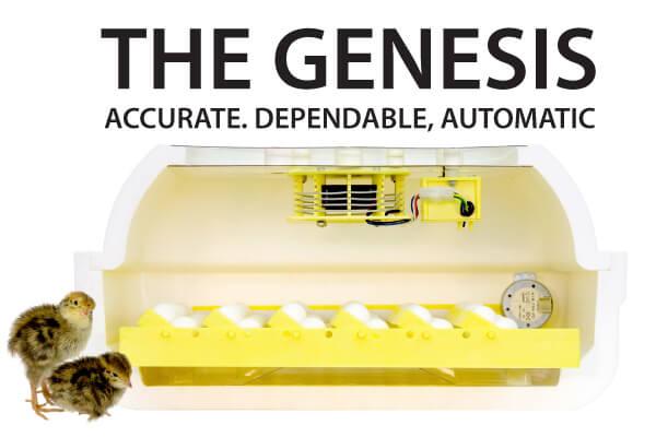 Incubator Genesis Hova Bator 1588 1611 176 88