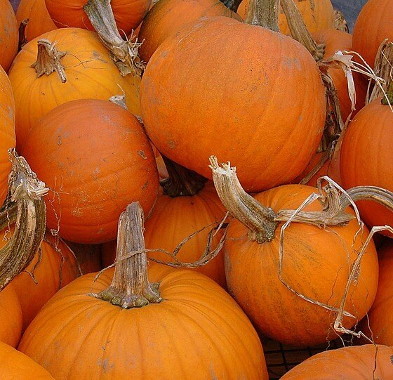 Pumpkin Connecticut Field Heirloom Seeds